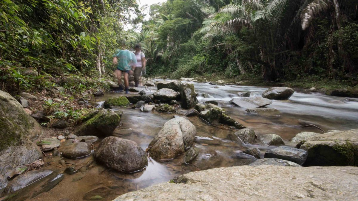 Hiking the River, Rio Chirapi, Pacto, Ecuador