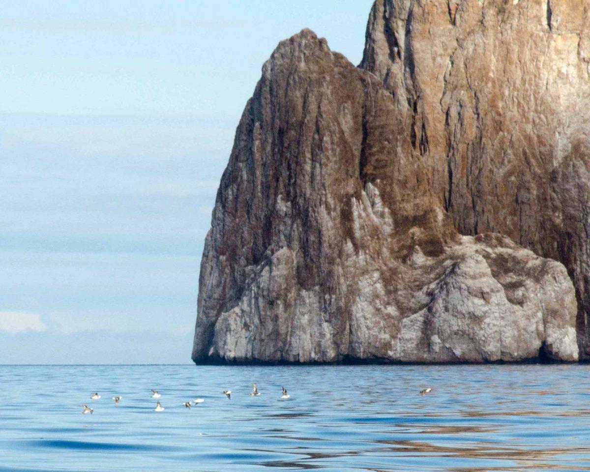 Galapagos Land Based Tour, Sea Lion