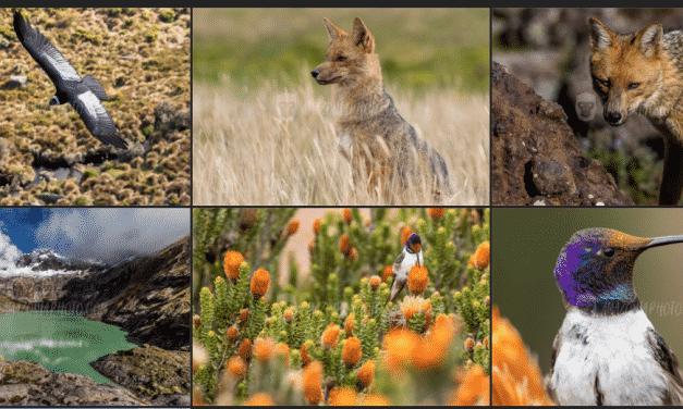 South American Wildlife Photographer: Humberto Castillo J.