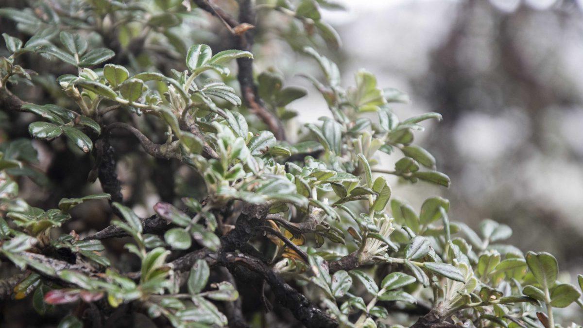 Polylepis Bark, Chimborazo Wildlife Reserve, Ecuador | ©Angela Drake / Not Your Average American