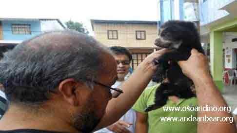 Saving Pinocchio the Ecuadorian Andean Bear