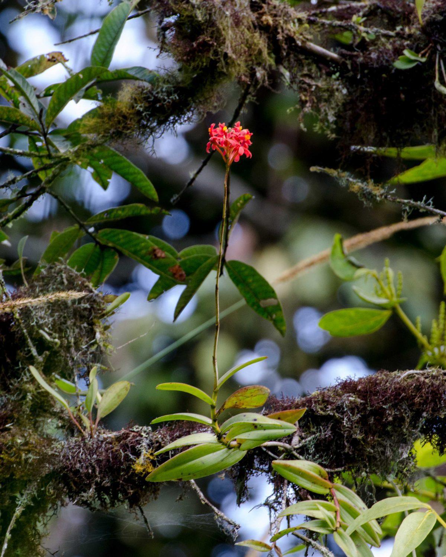 Orchids in a tree, San Jorge de Tandapaya, September 2015 | ©Angela Drake