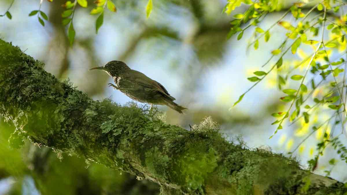 From the Woodcreeper Family, Botanical Garden in Loja, Ecuador | ©Angela Drake