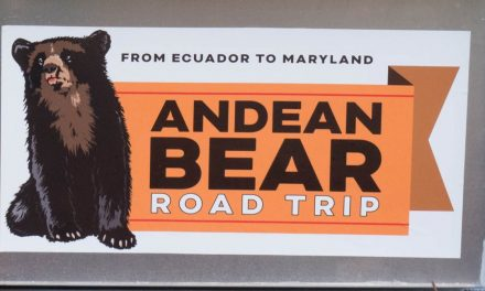 An Interview with Pinocchio the Andean Bear