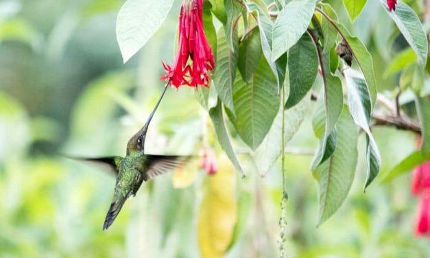 Birdwatching at the Quito Botanical Garden