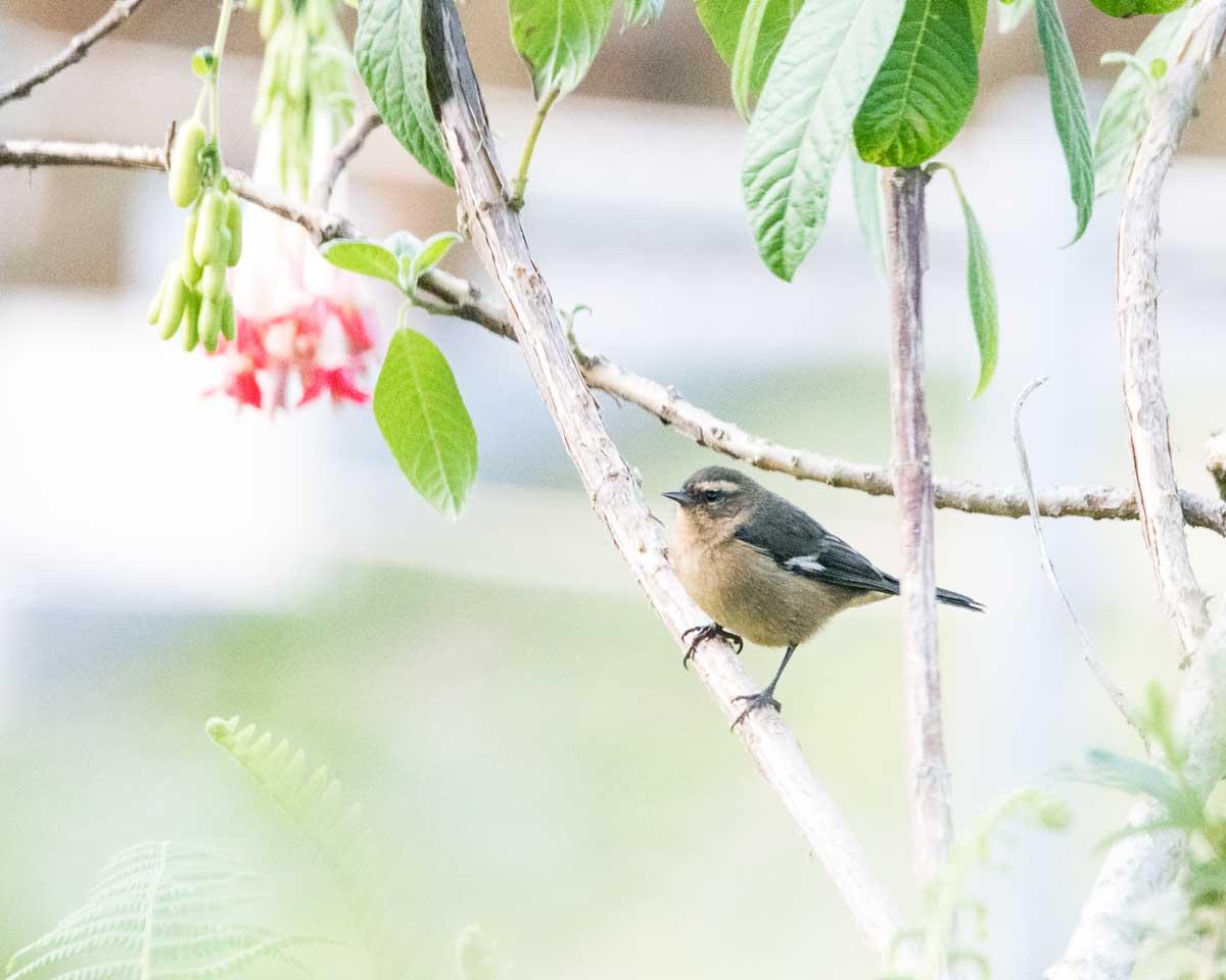 Unidentified, Quito Botanical Garden, Ecuador | ©Angela Drake