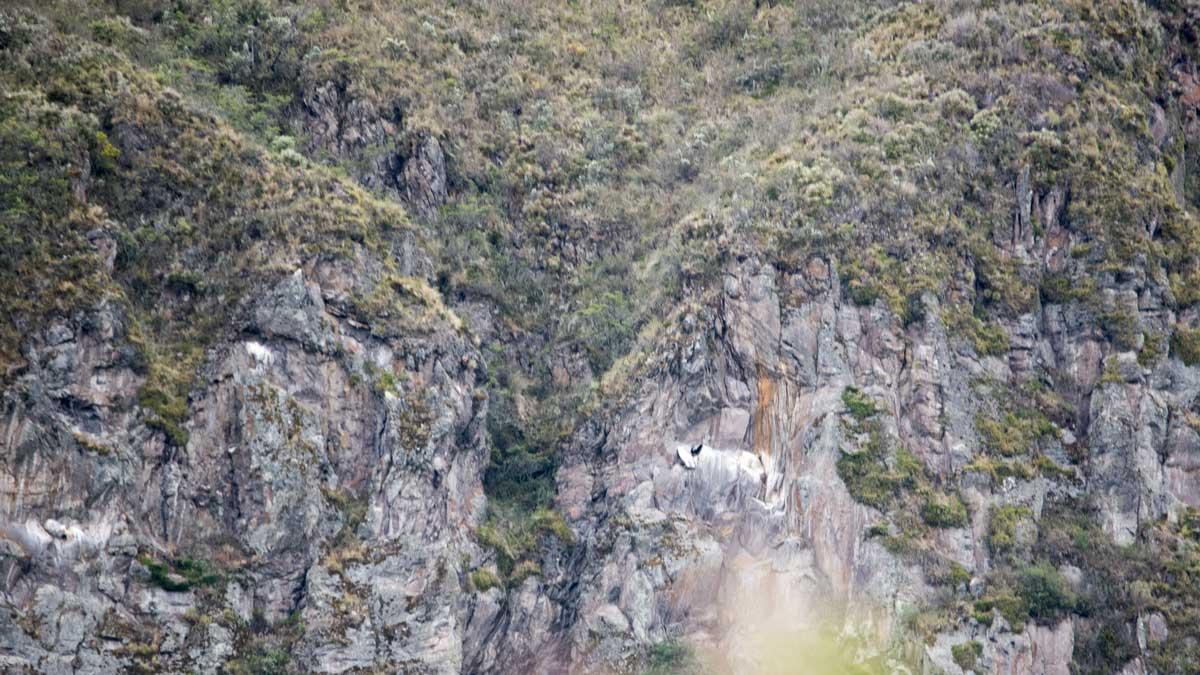 Andean Condor's Nest, Tambo Condor, Ecuador | ©Angela Drake