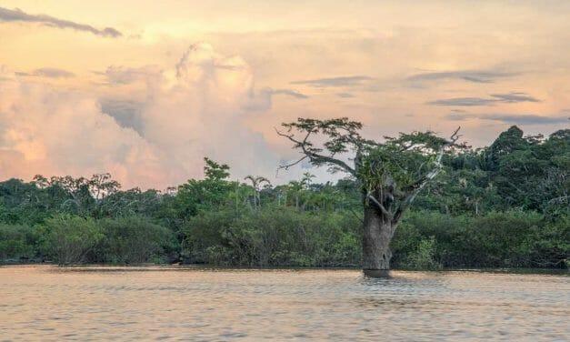 The Cuyabeno Wildlife Reserve: A Photo Essay
