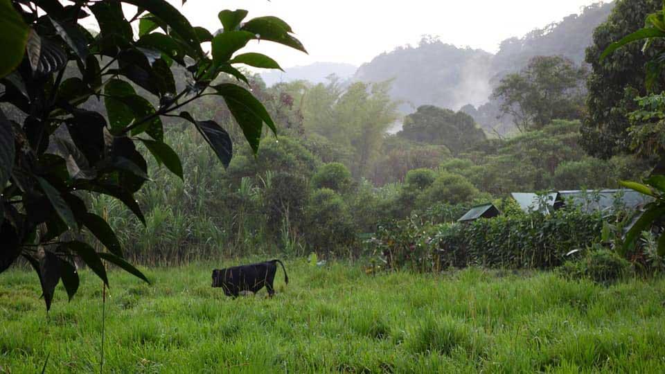 On a walk near the La Bikok Ecolodge, Mindo, Ecuador | ©Nicolaj Ullmann