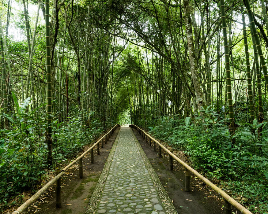 Forest trail at the San Agustin Outdoor Archeology Museum   ©Ernest Scott Drake