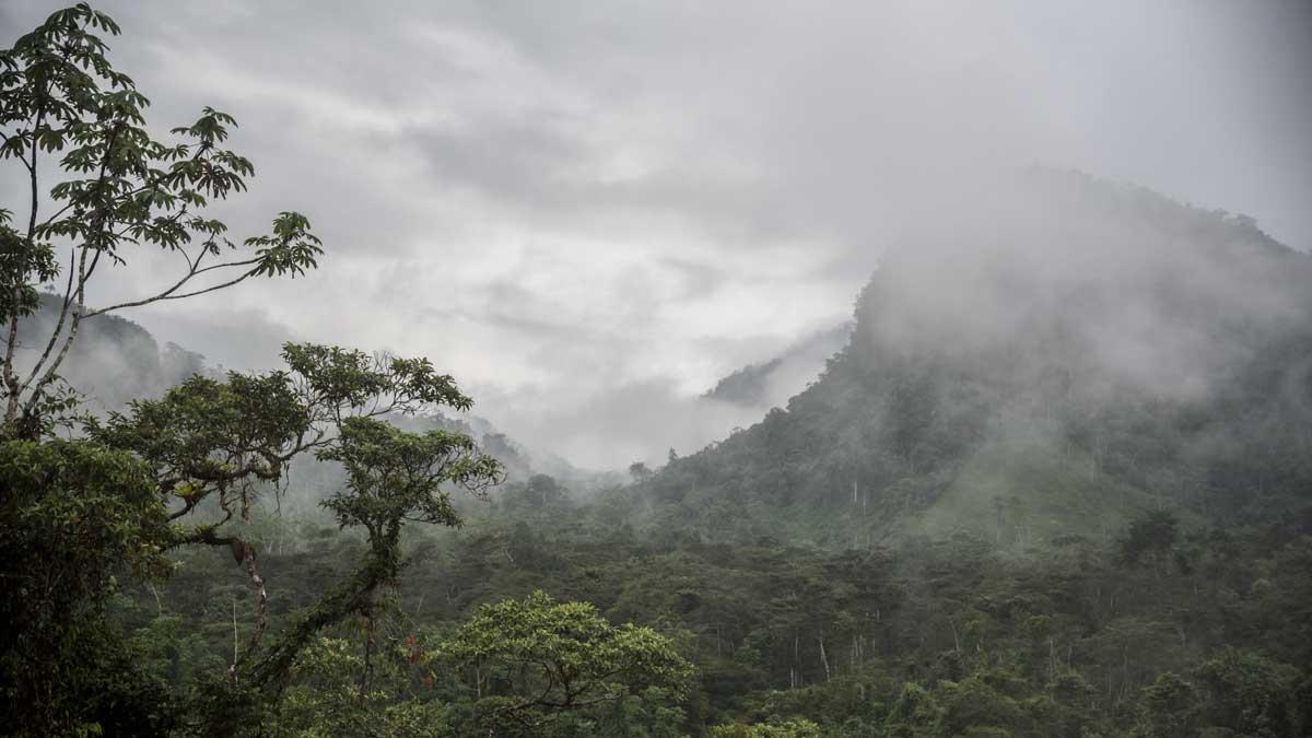 A misty morning leaving Cabañas Yankuam back towards the E-45 | ©Angela Drake