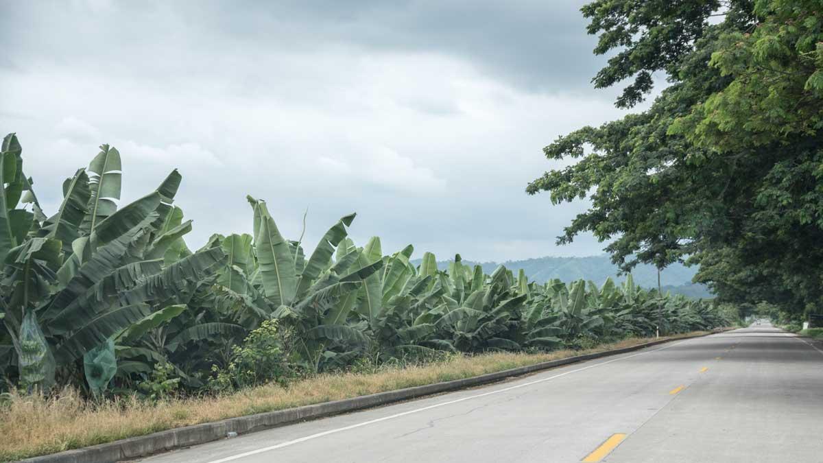 Banana Plantations along the E-25 | ©Angela Drake