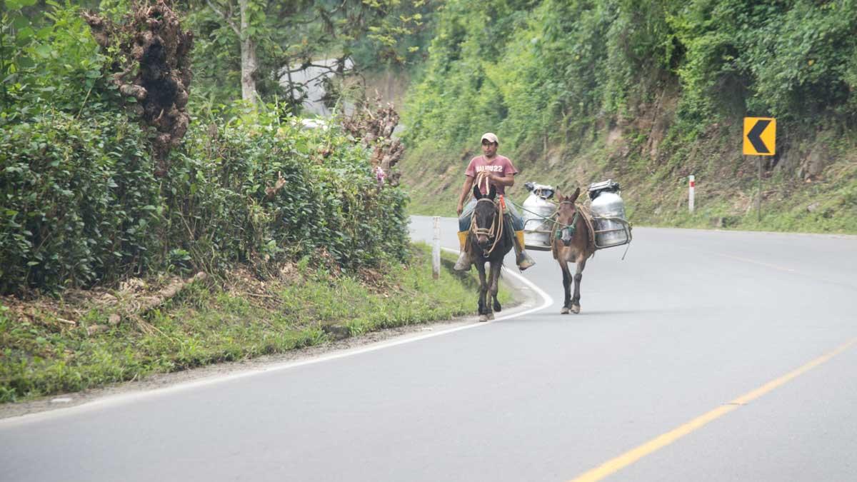Milk delivery near Zaruma, Ecuador | ©Angela Drake