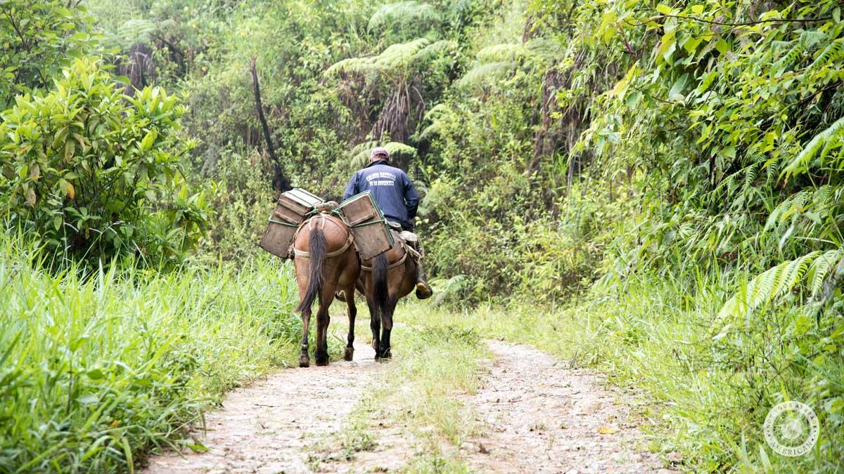 Cheese delivery on horseback, Guizhaguiña, Ecuador   ©Angela Drake