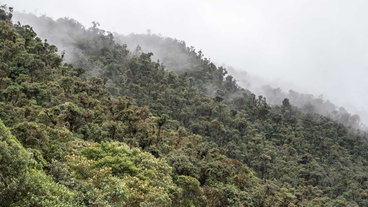 View from Casa Simpson, Tapichalaca Reserve, Ecuador | ©Angela Drake