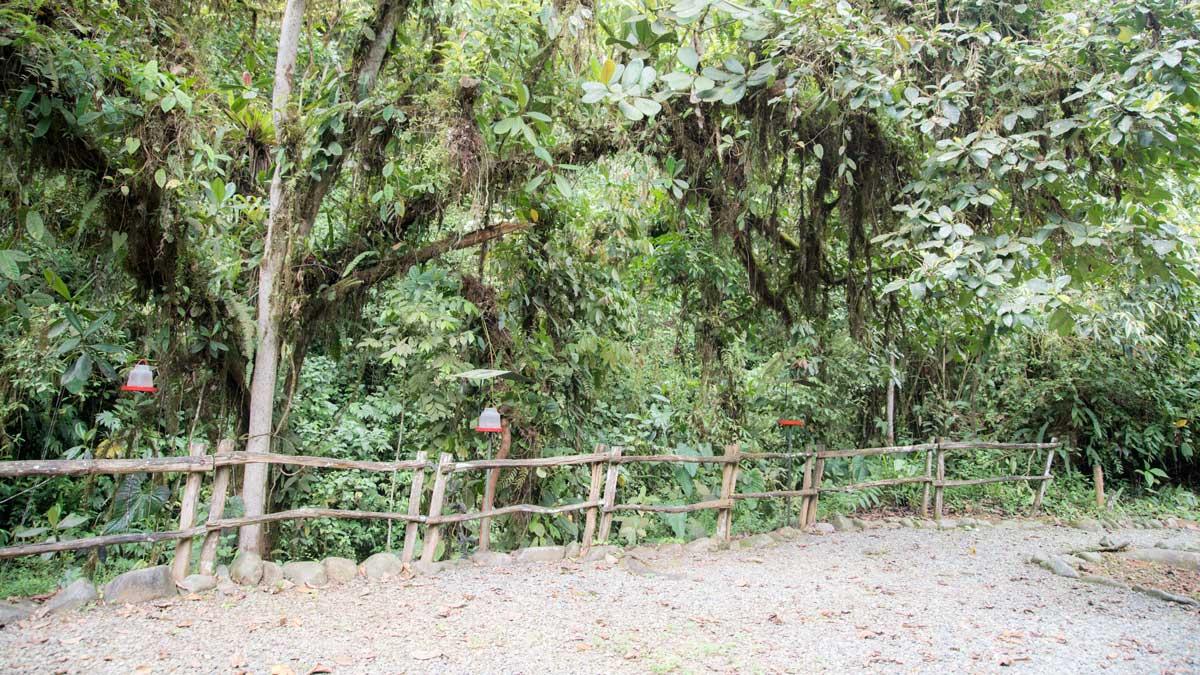 The Hummingbird Garden, Buenaventura, Piñas, Ecuador | ©Angela Drake