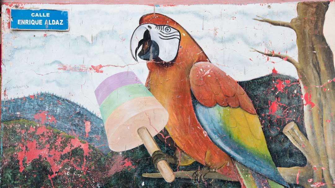 Parrot Mural Leading to the Isla del Pailon Trail, Rio Verde, Ecuador   ©Angela Drake