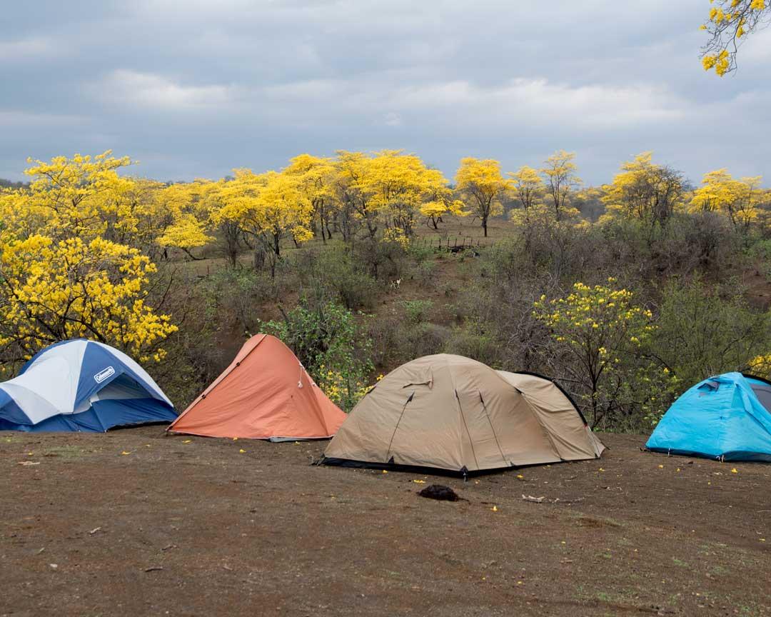 Tents outside of the Mangahurco Campground, Loja, Ecuador   ©Angela Drake