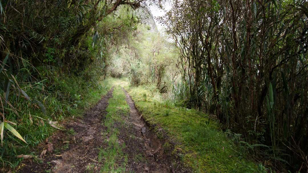 Camino de la Dispensa, Yanacocha, Ecuador   ©Angela Drake