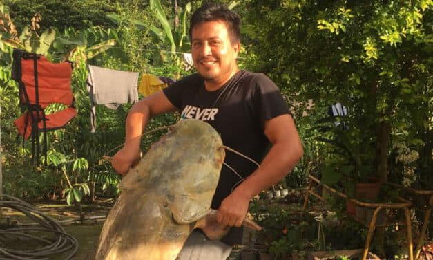 Giant Catfish in the Amazon